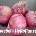 Darum sind Zwiebeln gesund – Inhaltsstoffe und Wirkung